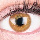 """Das Produktfoto zeigt unsere Farbige Braune Kontaktlinse """"Jasmine Brown"""" in einem echten Auge"""