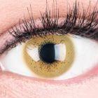 Das Produktfoto zeigt unsere Farbige Braune Kontaktlinse Lacey Brown in einem echten Auge