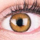 Das Produktfoto zeigt unsere Farbige Braune Kontaktlinse Mirel Brown in einem echten Auge