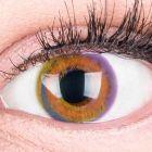 Das Produktfoto zeigt unsere Farbige Braune Kontaktlinse Paradise Brown in einem echten Auge