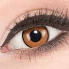 Das Produktfoto zeigt unsere Crazy braune Farbige Kontaktlinse Citrus in einem echten Auge
