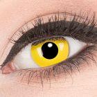 Das Produktfoto zeigt unsere Crazy grüne Farbige Kontaktlinse Shining in einem echten Auge