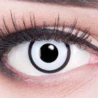 Das Produktfoto zeigt unsere Crazy weisse Farbige Kontaktlinse White Zombie in einem echten Auge