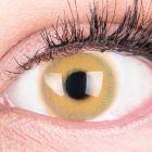 Das Produktfoto zeigt unsere Farbige Braune Kontaktlinse Alice Brown in einem echten Auge
