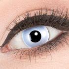 Das Produktfoto zeigt unsere Crazy graue Farbige Kontaktlinse Mirror in einem echten Auge