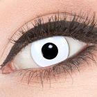 Das Produktfoto zeigt unsere Crazy weisse Farbige Kontaktlinse White Out in einem echten Auge